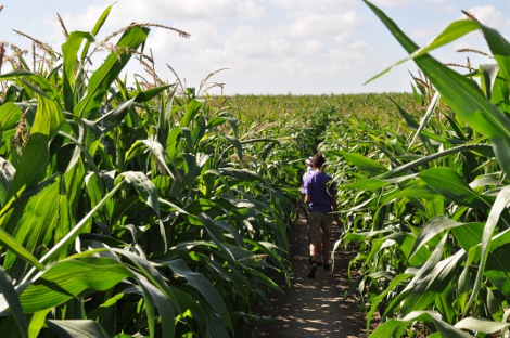 In Southwold Maize Maze