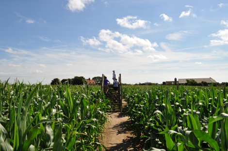 The bridge at the centre of Southwold Maize Maze